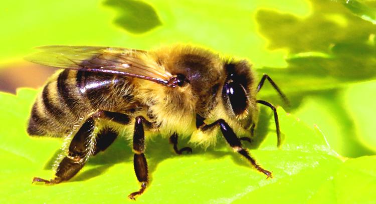 Как связаны продукты пчеловодства и уровня гормонов
